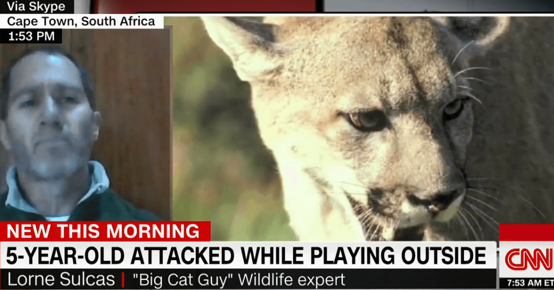 Interview with CNN about Big Cat Behavior